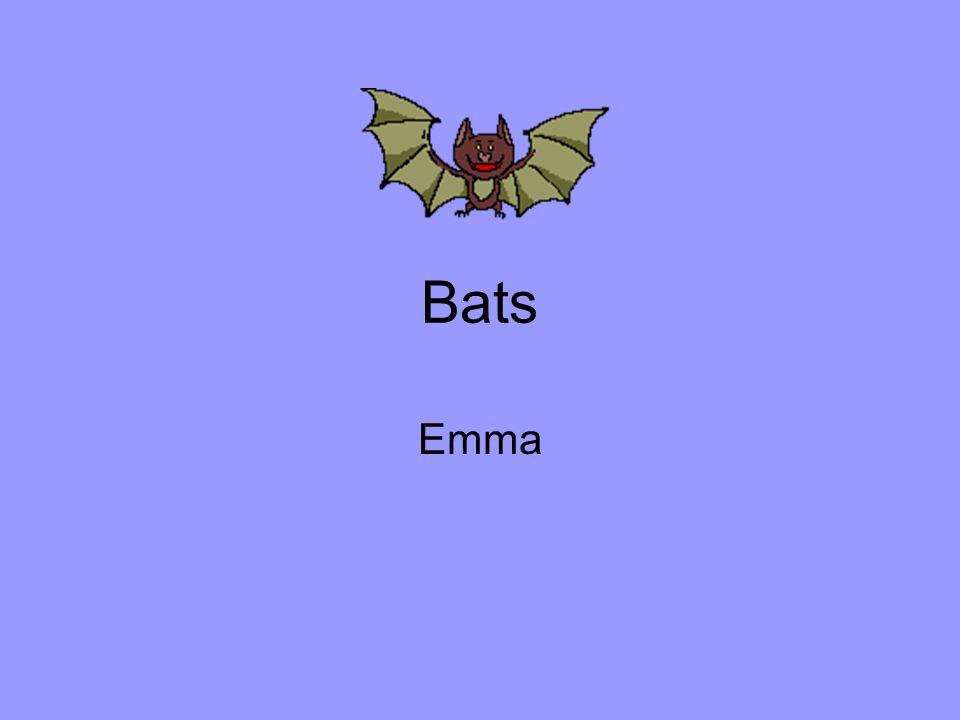 Bats Emma