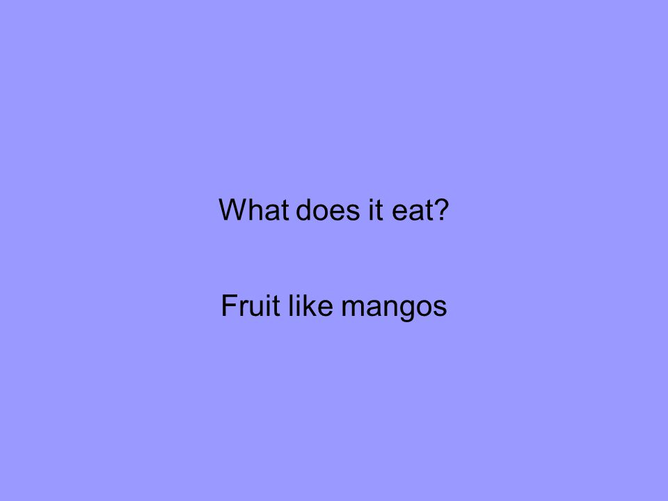 What does it eat Fruit like mangos