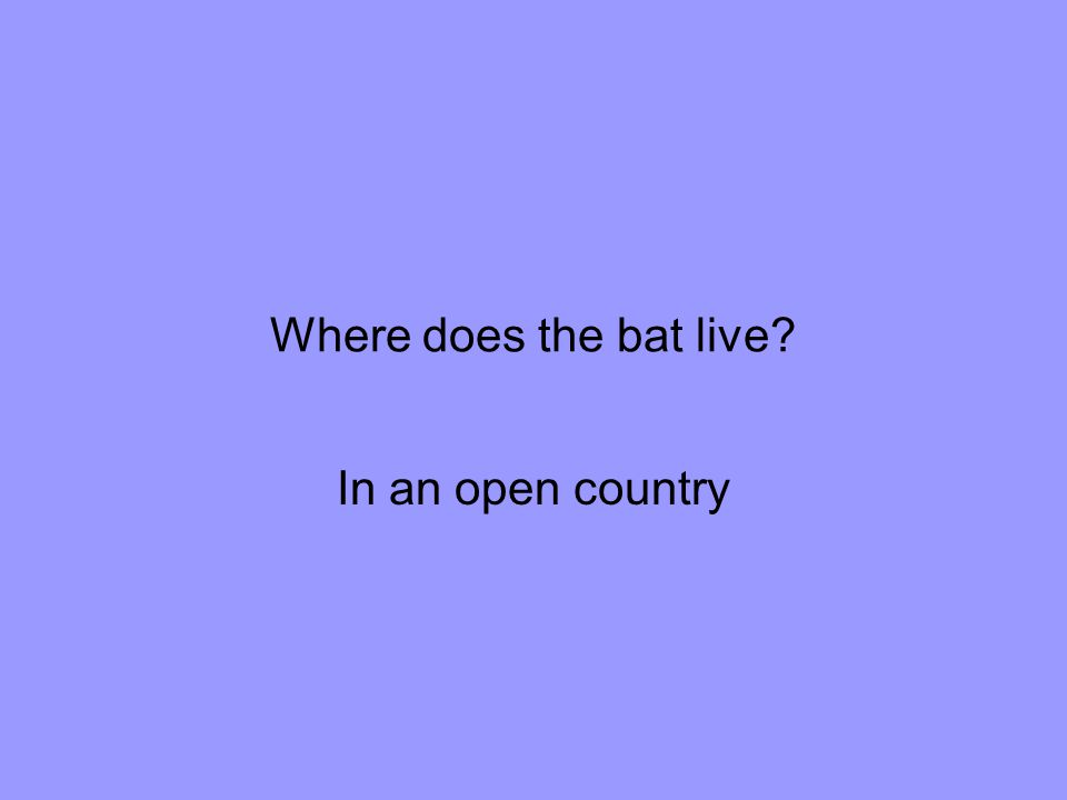 Where does the bat live In an open country