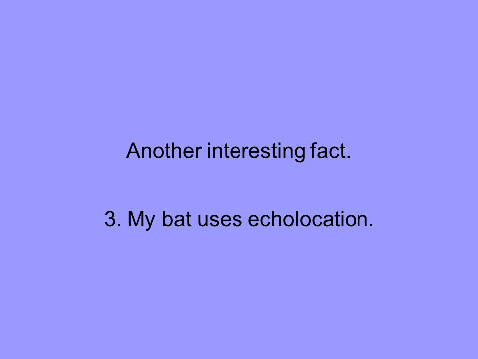 Another interesting fact. 3. My bat uses echolocation.