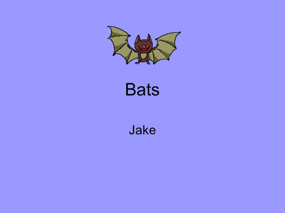Bats Jake