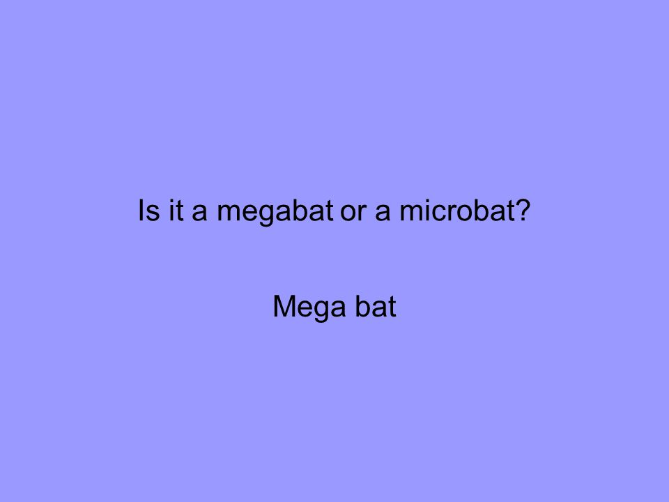 Is it a megabat or a microbat Mega bat