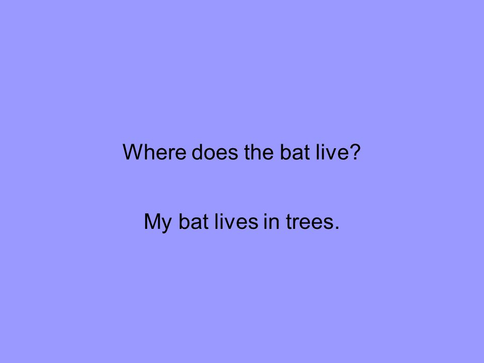 Where does the bat live My bat lives in trees.