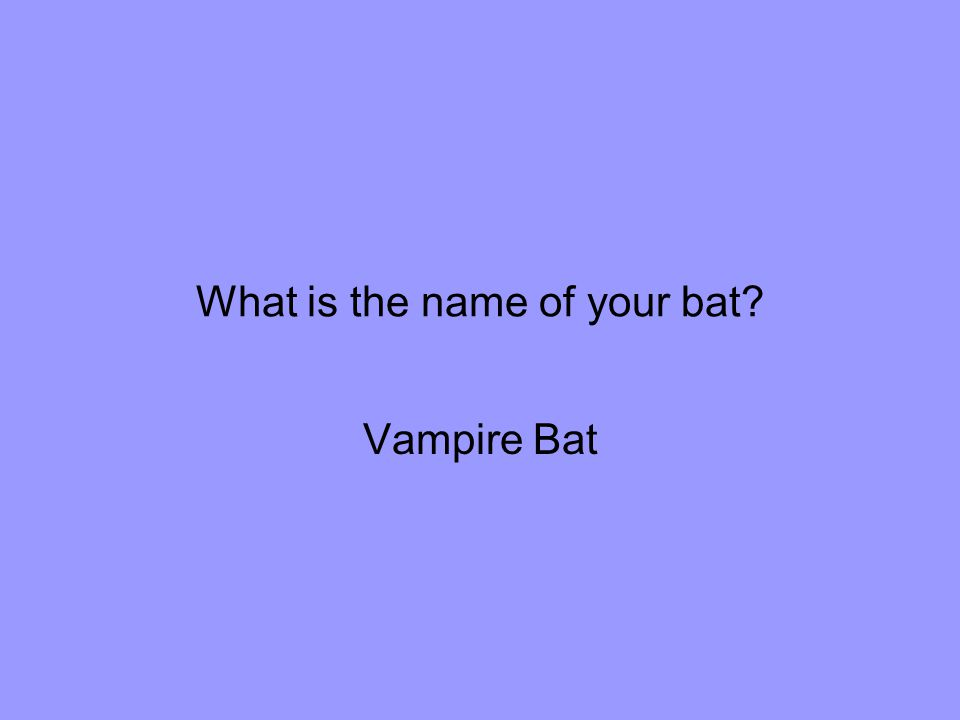 What is the name of your bat Vampire Bat