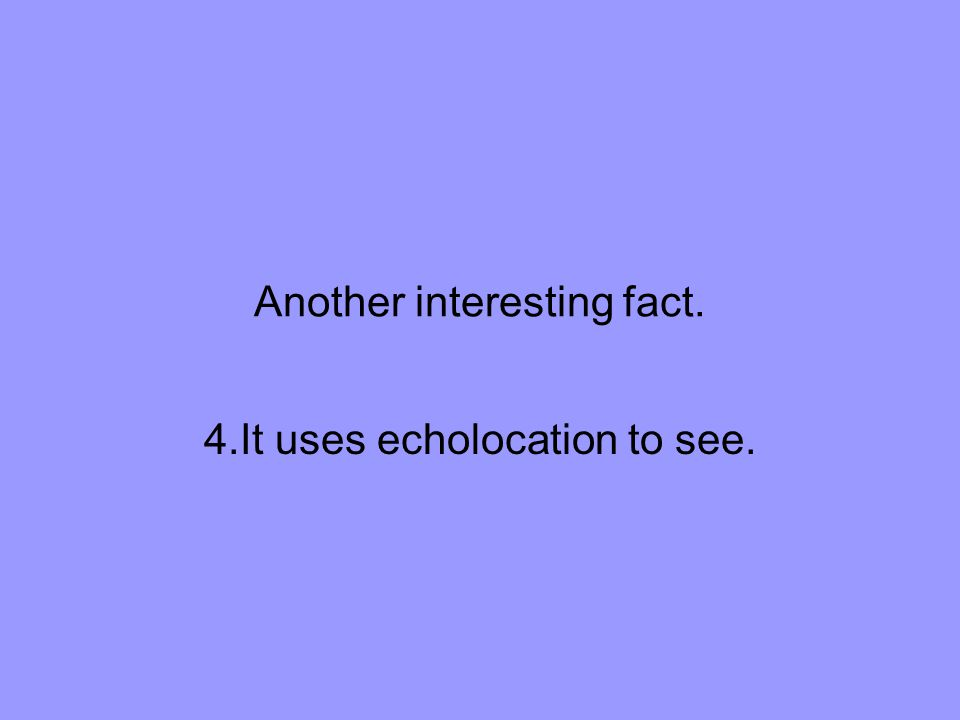 Another interesting fact. 4.It uses echolocation to see.