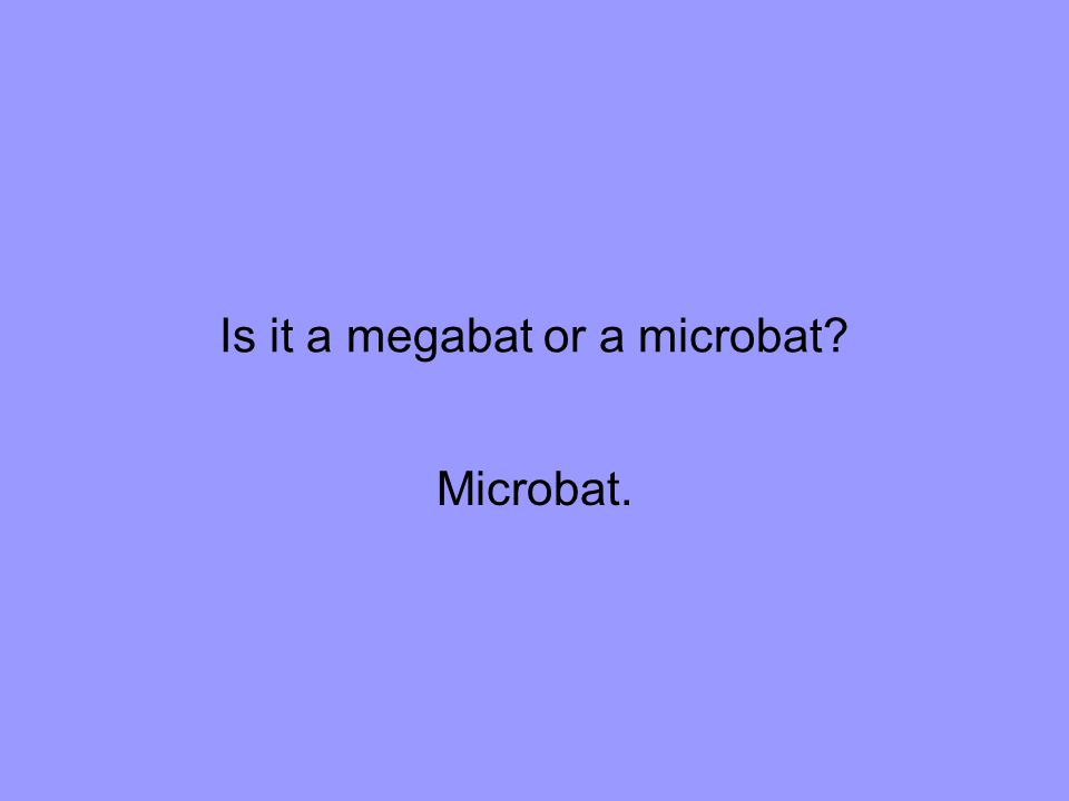 Is it a megabat or a microbat Microbat.