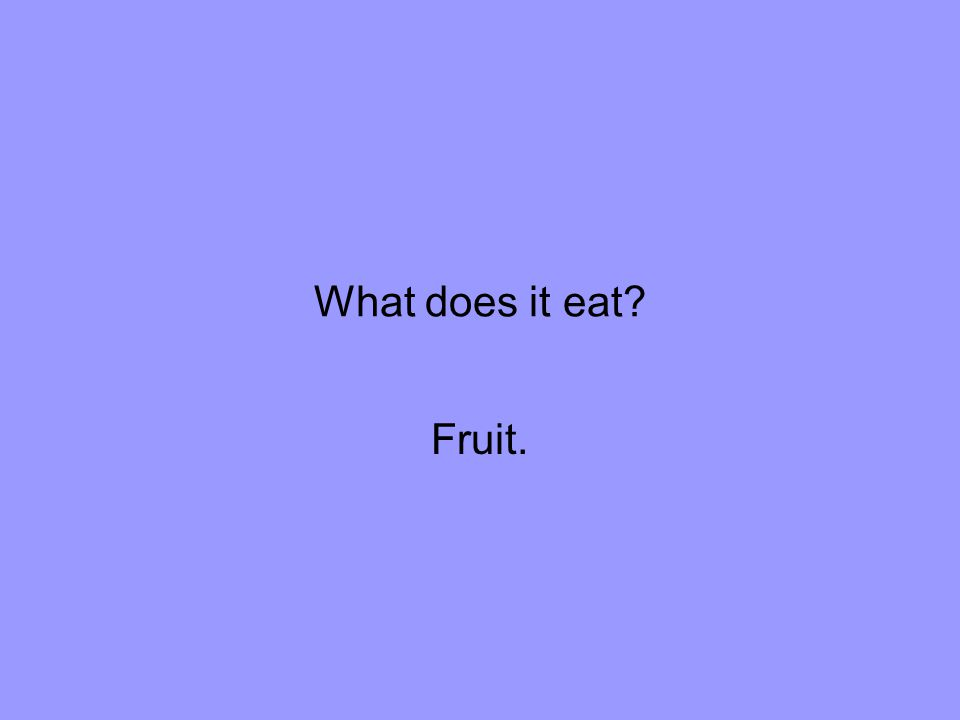 What does it eat Fruit.