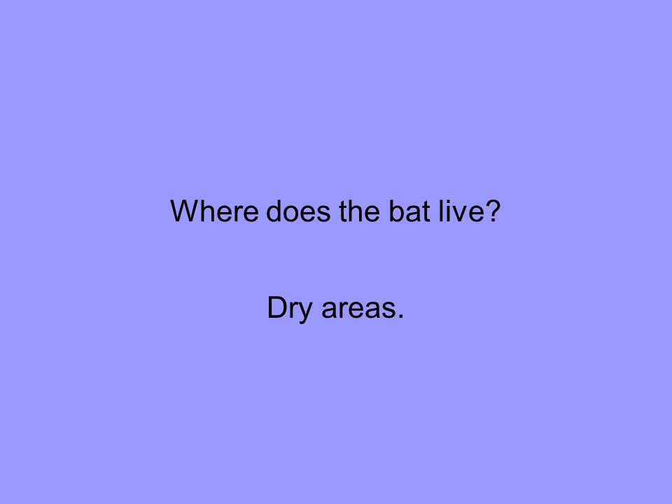 Where does the bat live Dry areas.