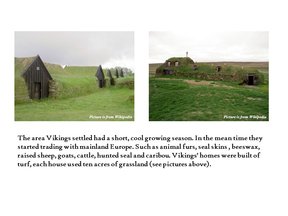 The area Vikings settled had a short, cool growing season. In the mean time they started trading with mainland Europe. Such as animal furs, seal skins