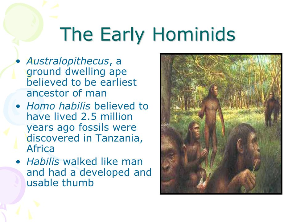 The Early Hominids Australopithecus, a ground dwelling ape believed to be earliest ancestor of man Homo habilis believed to have lived 2.5 million yea