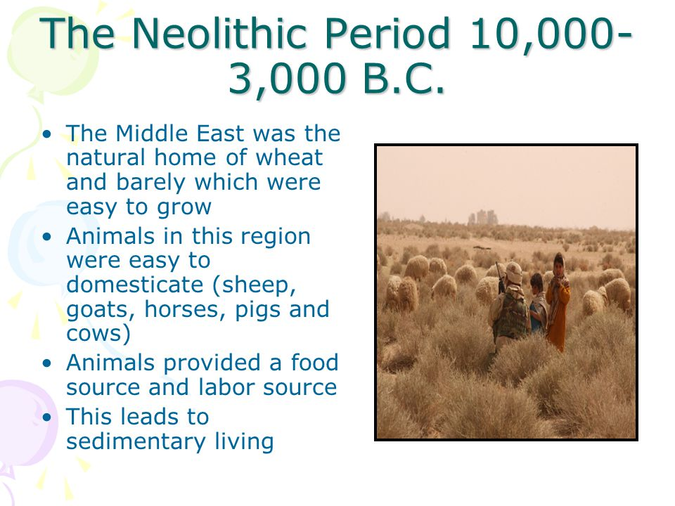 The Neolithic Period 10,000- 3,000 B.C. The Middle East was the natural home of wheat and barely which were easy to grow Animals in this region were e