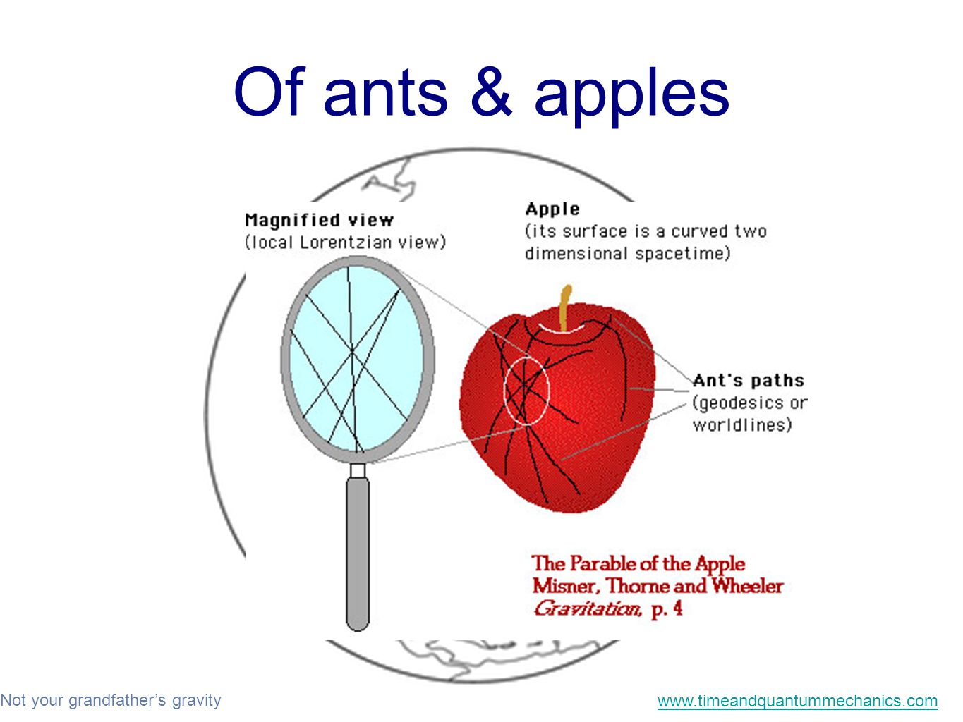 Not your grandfather's gravity www.timeandquantummechanics.com Of ants & apples
