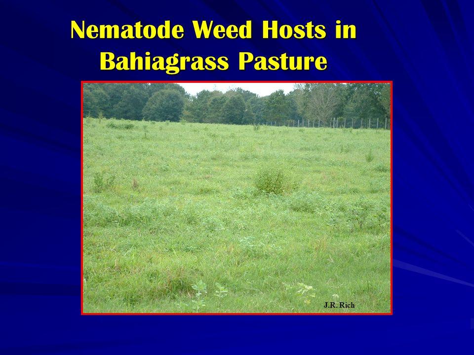 Nematode Weed Hosts in Bahiagrass Pasture J.R. Rich