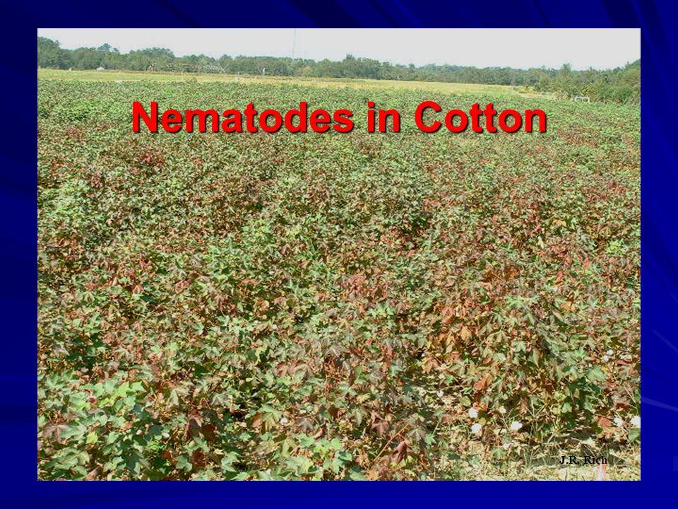 Nematodes in Cotton J.R. Rich