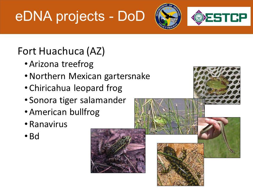 eDNA projects - DoD Fort Huachuca (AZ) Arizona treefrog Northern Mexican gartersnake Chiricahua leopard frog Sonora tiger salamander American bullfrog Ranavirus Bd