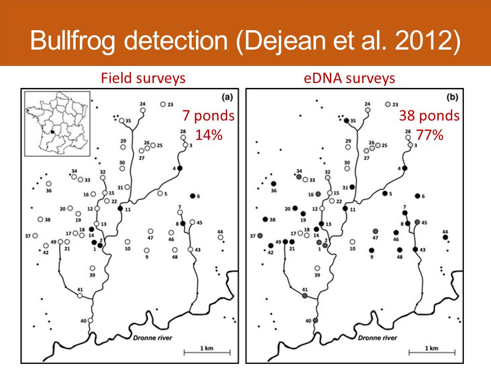 Field surveyseDNA surveys 7 ponds 14% 38 ponds 77% Bullfrog detection (Dejean et al. 2012)