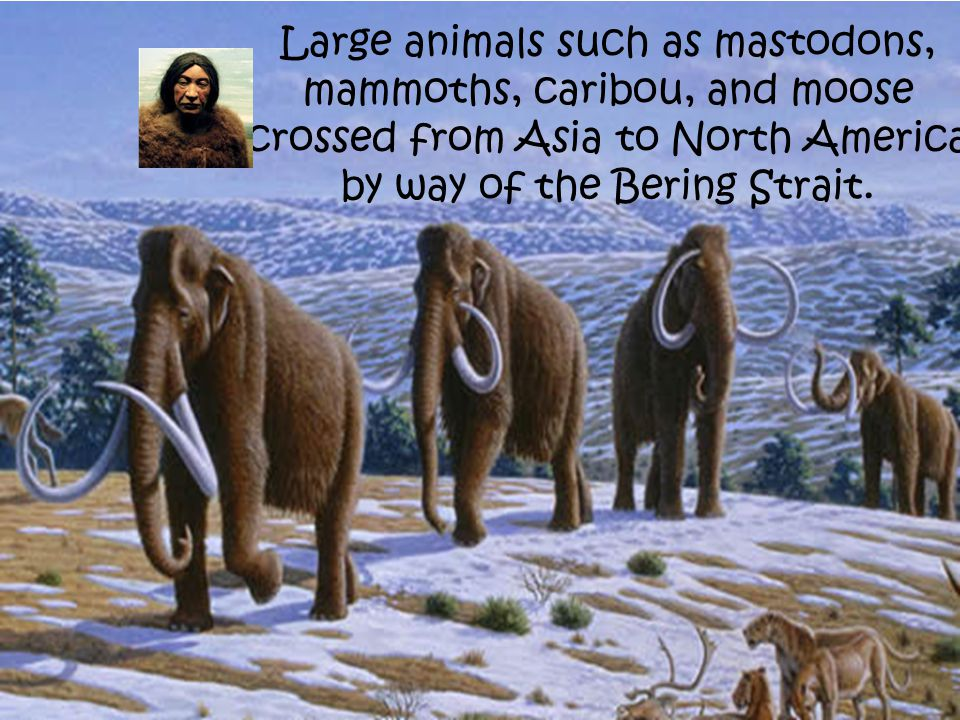 Large animals such as mastodons, mammoths, caribou, and moose crossed from Asia to North America by way of the Bering Strait.