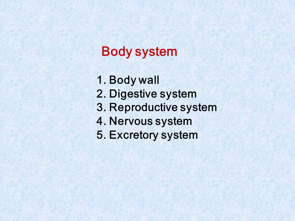 Body system 1.Body wall 2. Digestive system 3. Reproductive system 4.