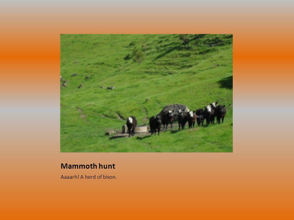 Mammoth hunt Aaaarh! A herd of bison.