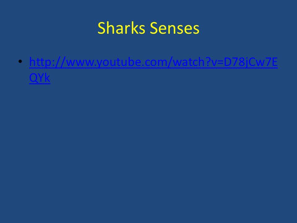 Sharks Senses http://www.youtube.com/watch?v=D78jCw7E QYk http://www.youtube.com/watch?v=D78jCw7E QYk