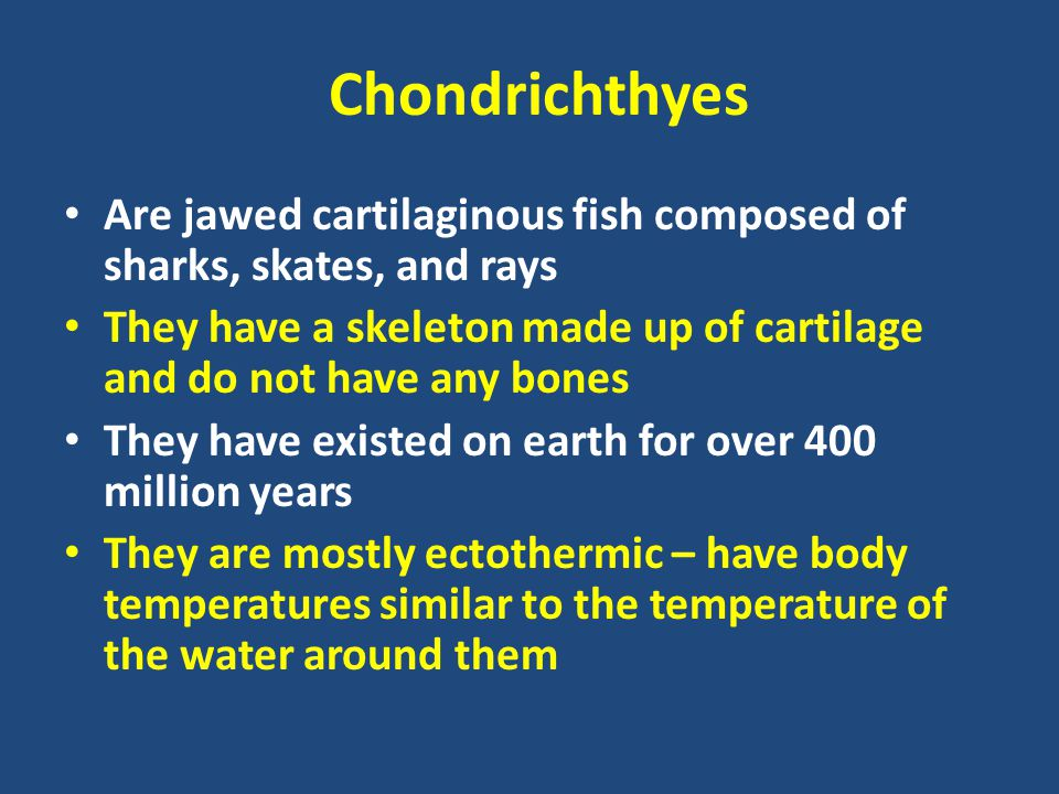 Chondrichthyes Are jawed cartilaginous fish composed of sharks, skates, and rays They have a skeleton made up of cartilage and do not have any bones T