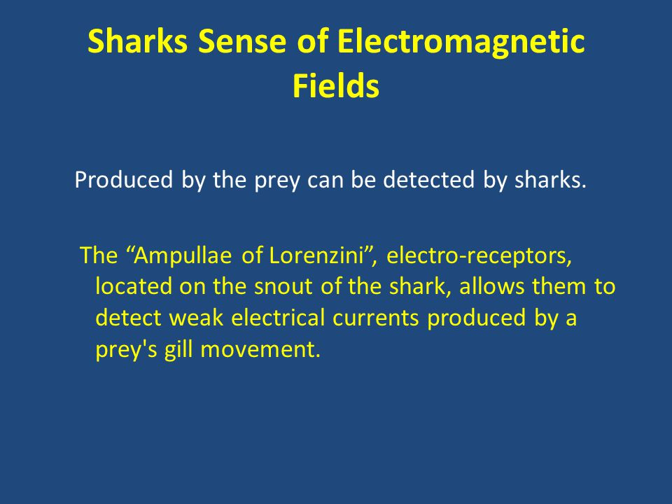Sharks Sense of Electromagnetic Fields Produced by the prey can be detected by sharks.