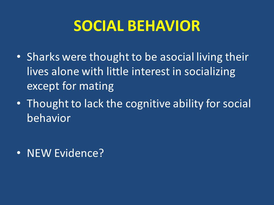 SOCIAL BEHAVIOR Sharks were thought to be asocial living their lives alone with little interest in socializing except for mating Thought to lack the cognitive ability for social behavior NEW Evidence?
