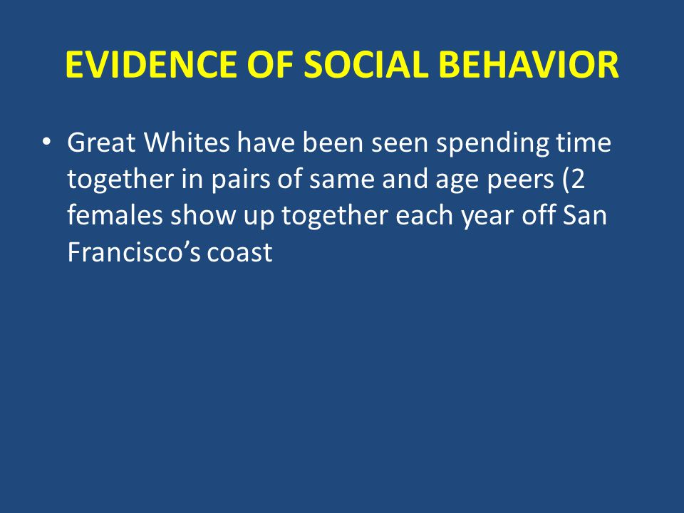 EVIDENCE OF SOCIAL BEHAVIOR Great Whites have been seen spending time together in pairs of same and age peers (2 females show up together each year off San Francisco's coast