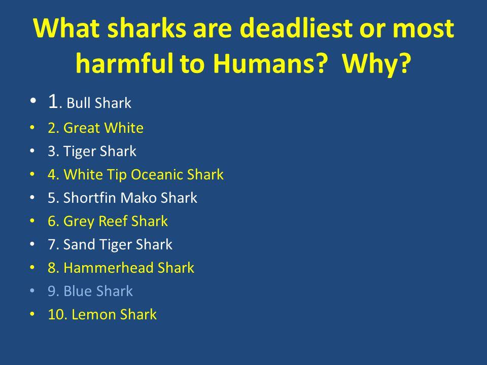 What sharks are deadliest or most harmful to Humans? Why? 1. Bull Shark 2. Great White 3. Tiger Shark 4. White Tip Oceanic Shark 5. Shortfin Mako Shar