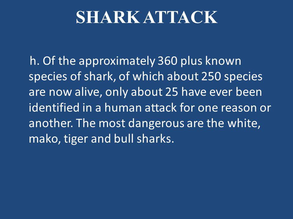 SHARK ATTACK h.