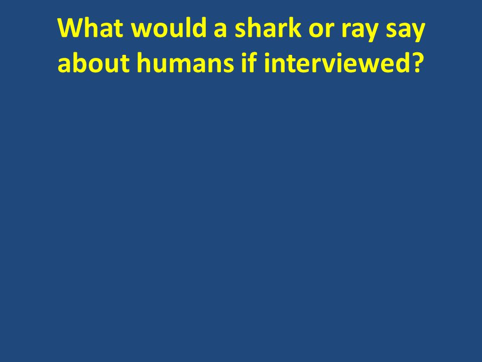 What would a shark or ray say about humans if interviewed?