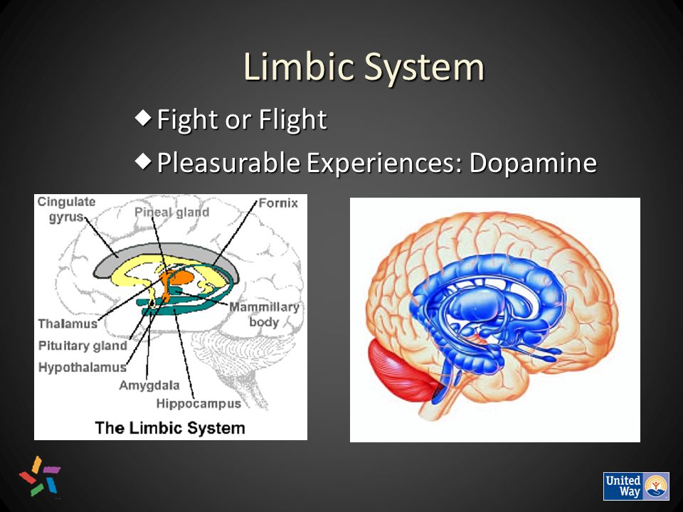 Limbic System  Fight or Flight  Pleasurable Experiences: Dopamine
