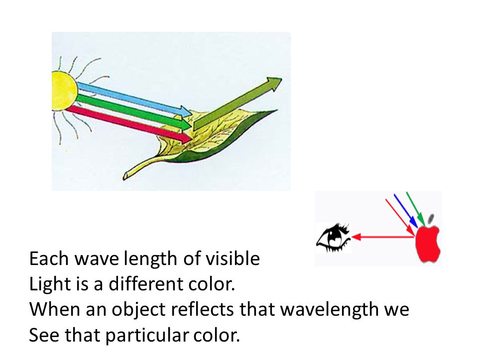 Each wave length of visible Light is a different color. When an object reflects that wavelength we See that particular color.