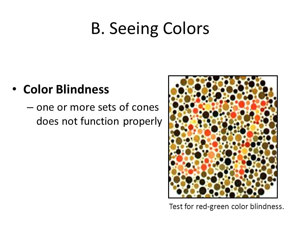 B. Seeing Colors Color Blindness – one or more sets of cones does not function properly Test for red-green color blindness.