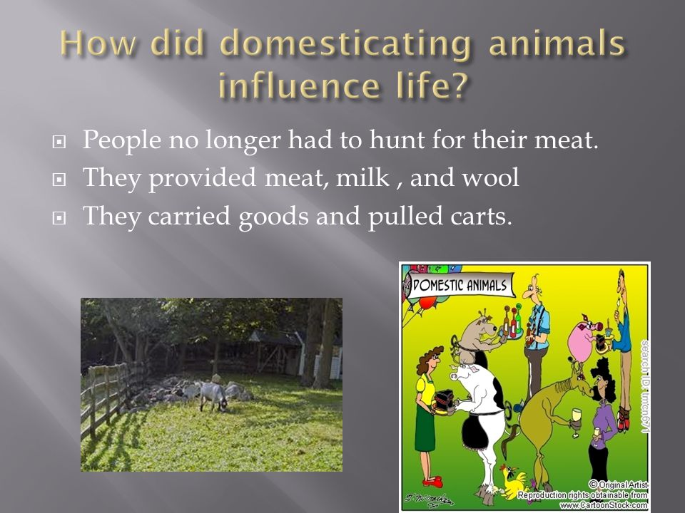  It gave  light  protection from animals  Warmth  Cooked meat which made it last longer