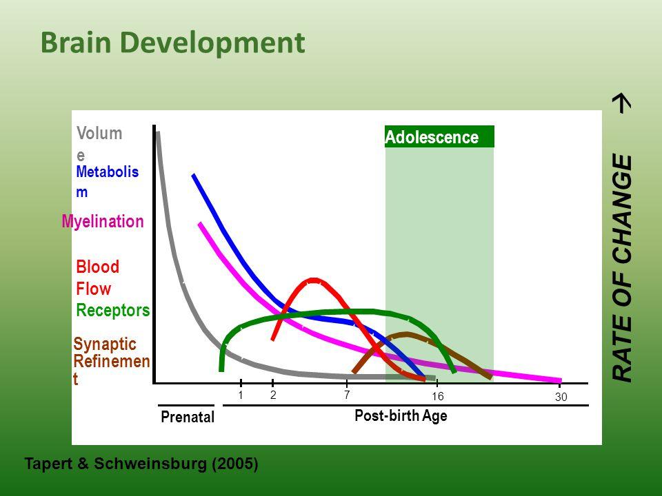 Brain Development 12 7 16 30 Prenatal Post-birth Age RATE OF CHANGE  Myelination Synaptic Refinemen t Volum e Metabolis m Blood Flow Receptors Tapert & Schweinsburg (2005) Adolescence