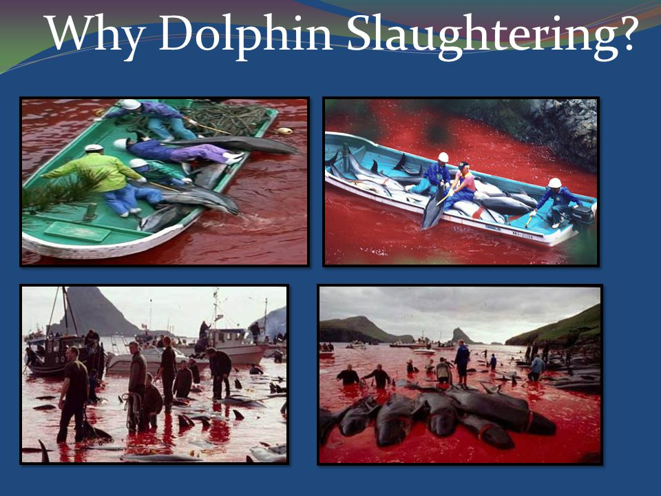 Why Dolphin Slaughtering