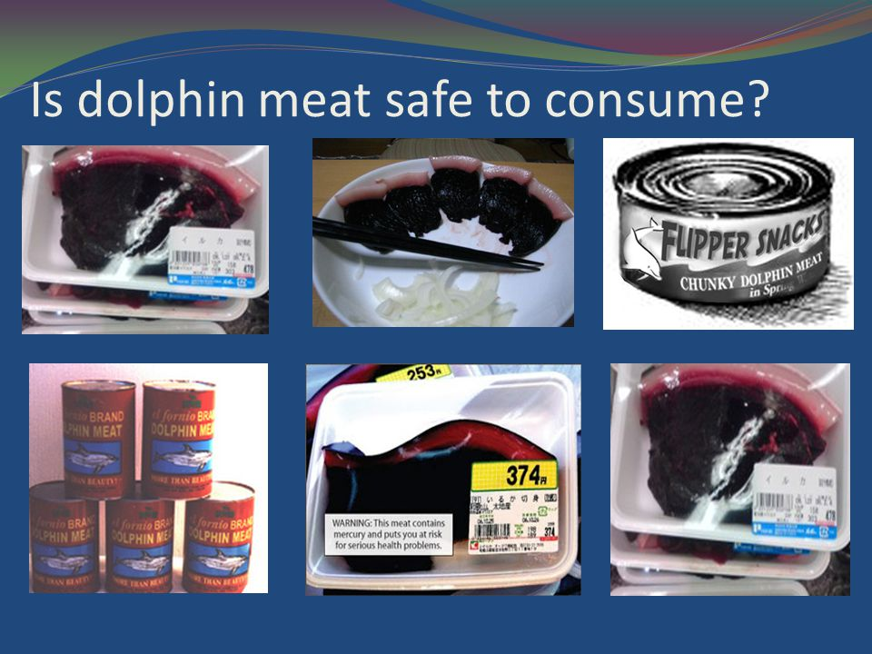 Is dolphin meat safe to consume