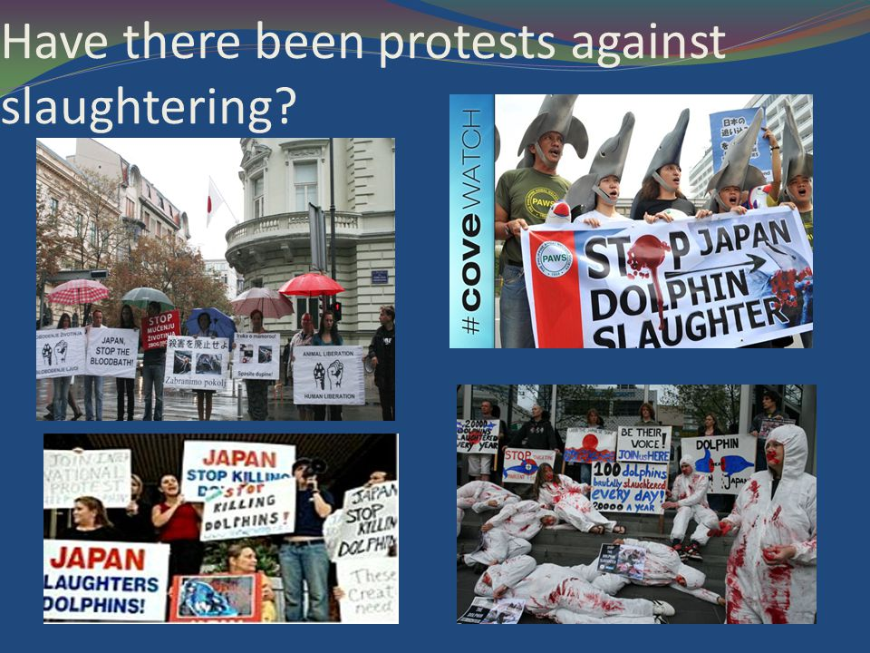 Have there been protests against slaughtering