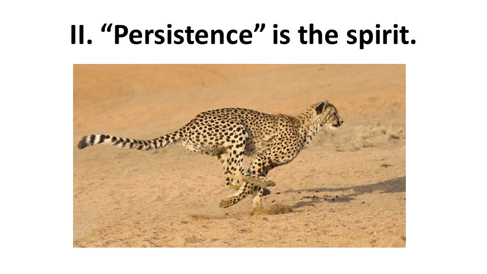 II. Persistence is the spirit.