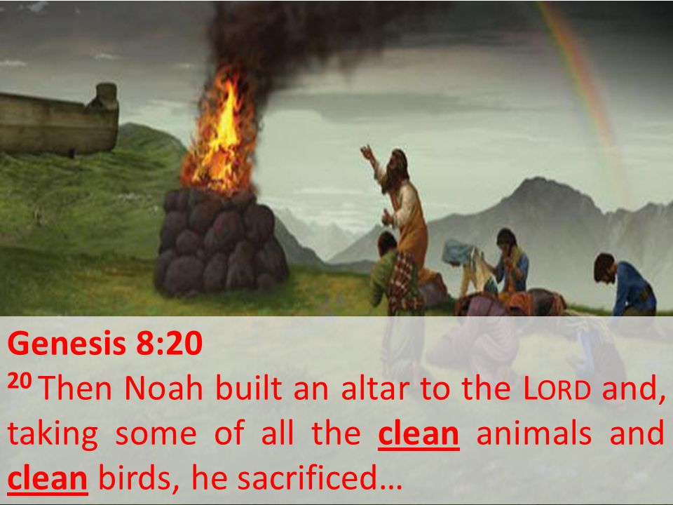 Genesis 8:20 20 Then Noah built an altar to the L ORD and, taking some of all the clean animals and clean birds, he sacrificed…