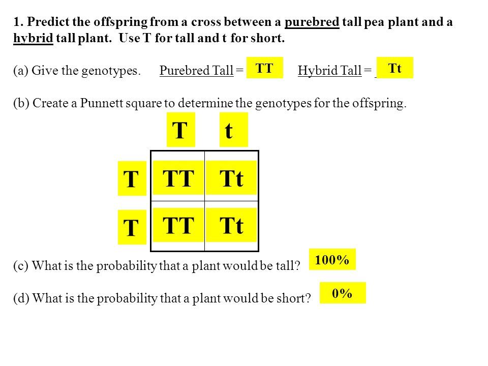1. Predict the offspring from a cross between a purebred tall pea plant and a hybrid tall plant. Use T for tall and t for short. (a) Give the genotype