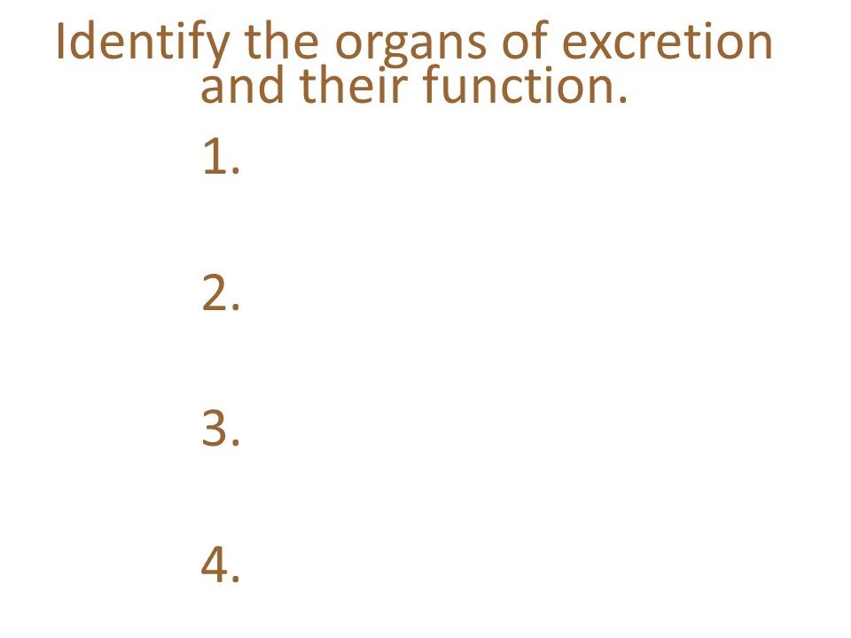 Identify the organs of excretion and their function. 1. 2. 3. 4.