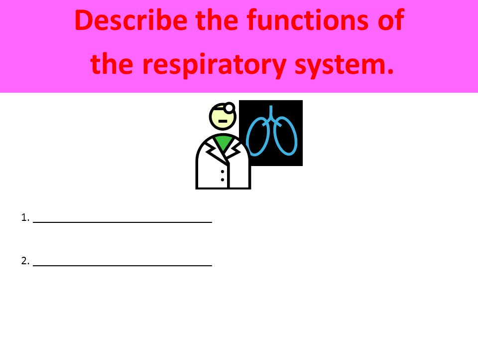 Describe the functions of the respiratory system. 1.