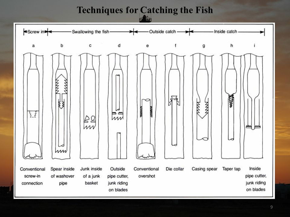 9 Techniques for Catching the Fish