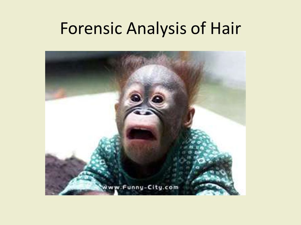 Introduction Human hair is one of the most frequently found pieces of evidence at the scene of a violent crime.