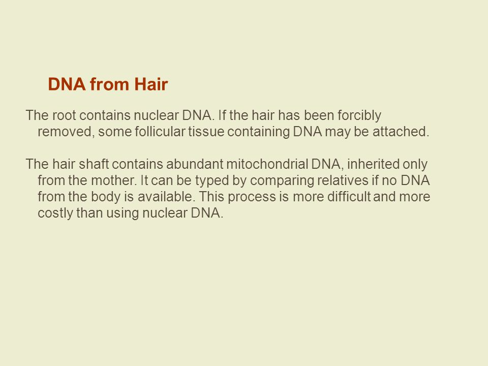 DNA from Hair The root contains nuclear DNA. If the hair has been forcibly removed, some follicular tissue containing DNA may be attached. The hair sh