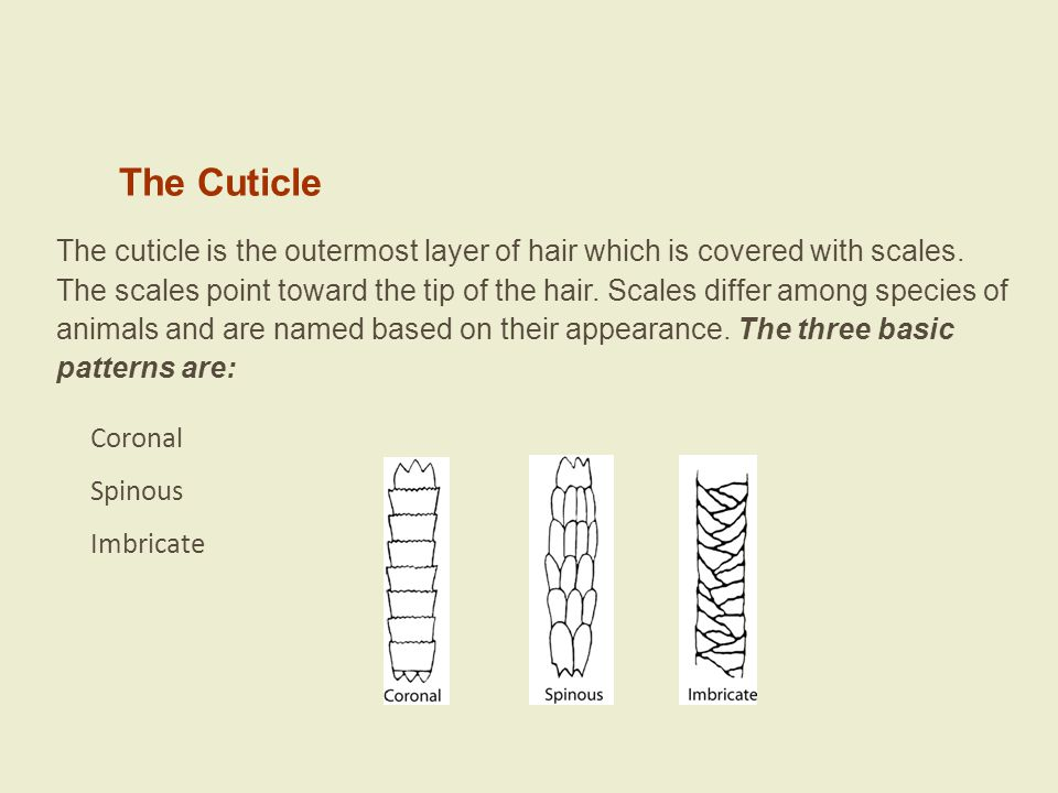 Questions Can the body area from which a hair originated be determined.