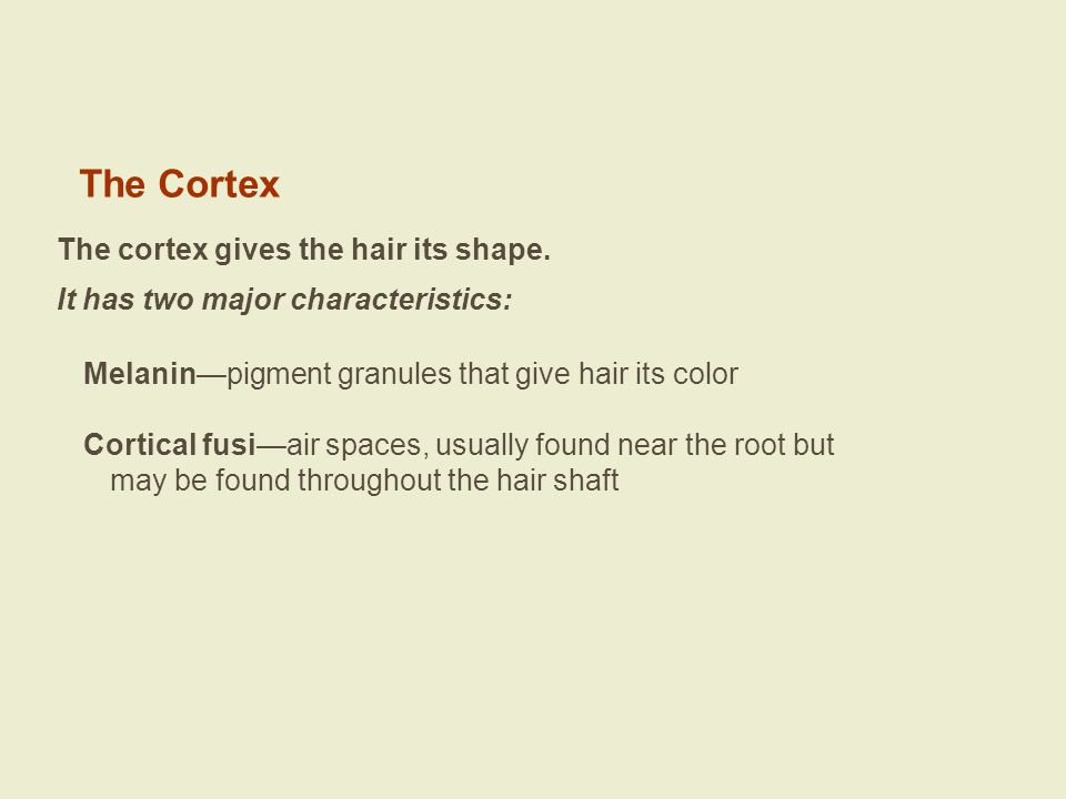Special Conditions of Hair The following slides show the ends of several different species of hairs