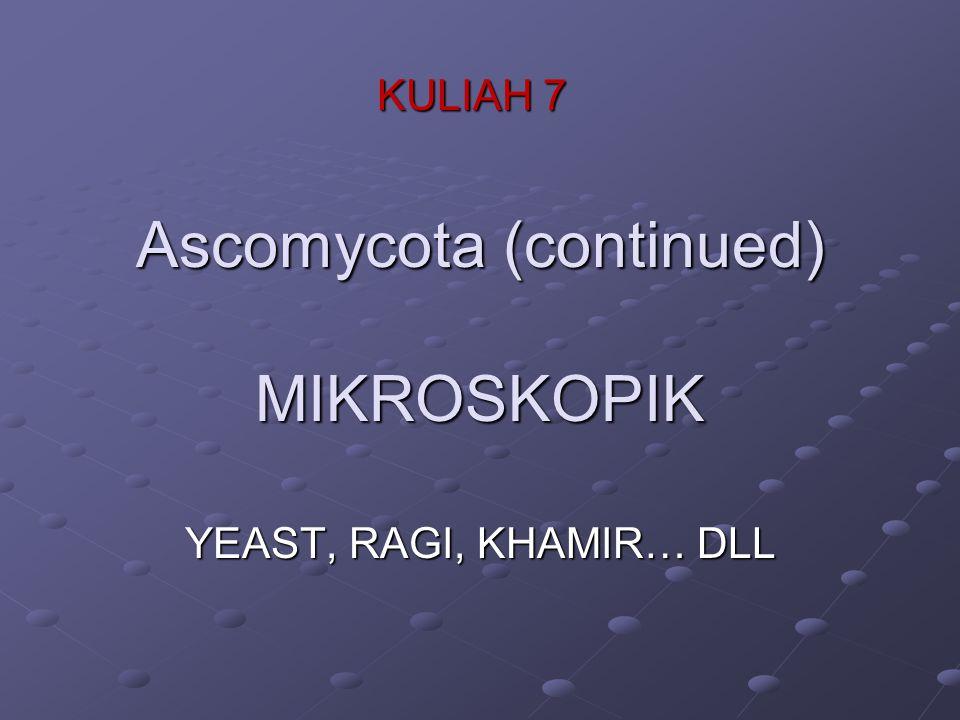Ascomycota (continued) MIKROSKOPIK YEAST, RAGI, KHAMIR… DLL KULIAH 7